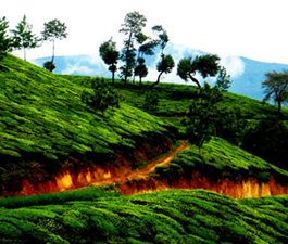 6 Days Munnar Trivandrum holiday packages